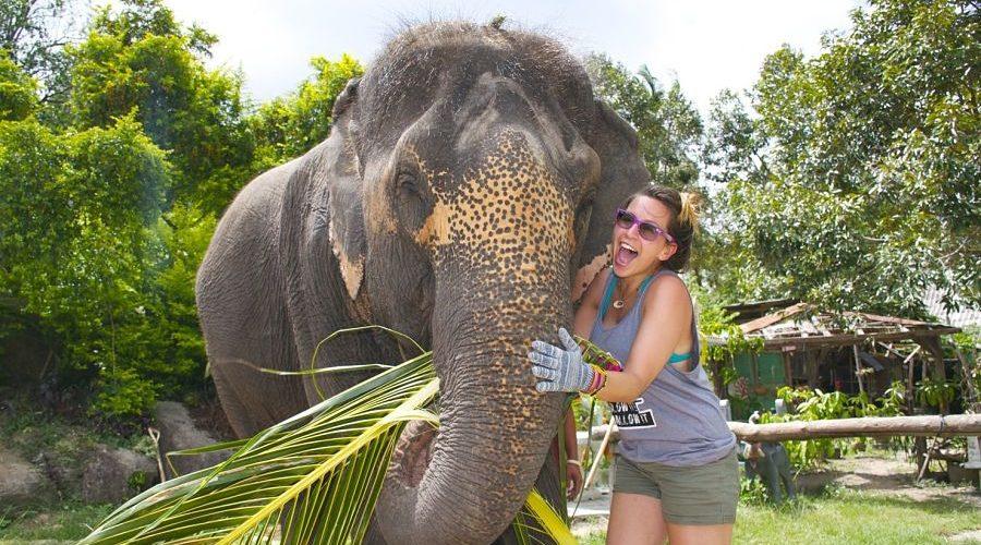 Elephant Experience Thaintro tour