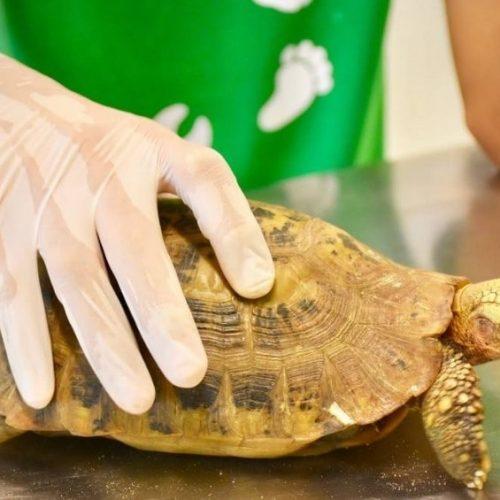 Schildpadden vrijwilligerswerk in Australie